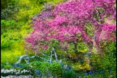 Springtime by Lois Wittenberg