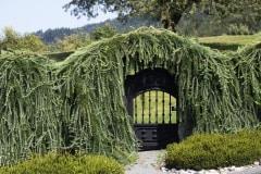 Gateway To Fairyland by Irene Mcneill