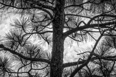 Clouds Peeking Through The Tree by  Irene Theriau