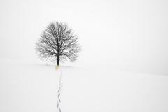 Pee Tree by Jim Hatch