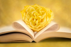 A Single Yellow Rose by Irene Theriau