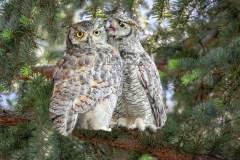 Sweet Talkin Owl by Pat Ellingson