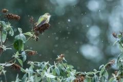 Winter Warrior by Carol Kelpin