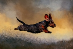 The Flying Dachshund by Tracy Lee