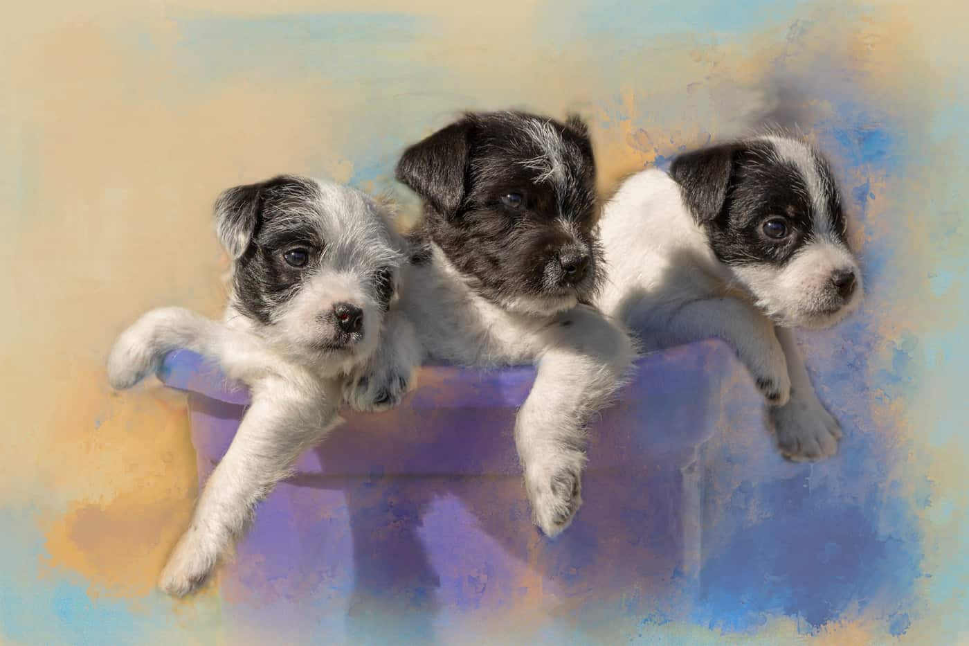 Potted Puppies by Tracy Lee