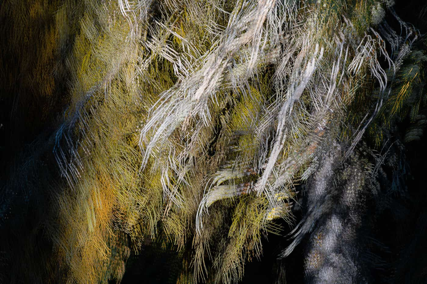Crying In The Night--Tree Abstract by Christophe Potworowski