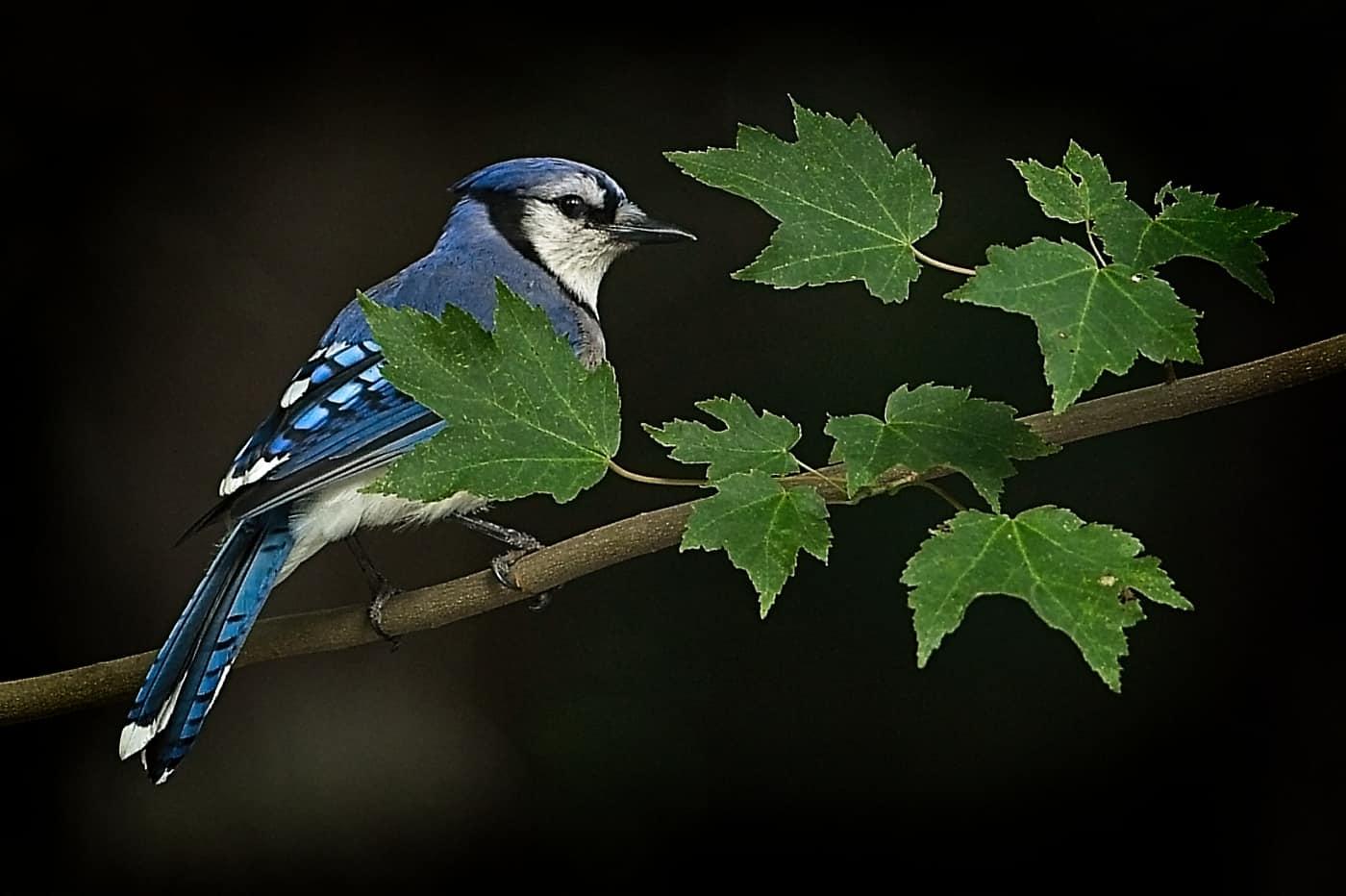 Amongst The Leaves by Bo Wiedemann