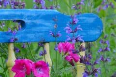 Spring Colours In My Backyard by  Jodi Marsh