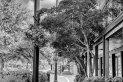 Cloverdale Street In Black And White by Carol Jackson