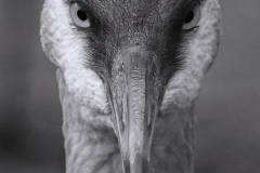 The Curious Crane by Gloria Szabo
