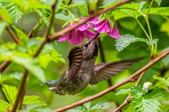 A Taste Of Spring by Carla Hamilton