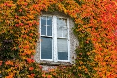 Autumns Window by  Anita Teljeur
