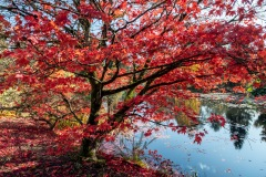 Beautiful Fall Colours by  Irene Theriau