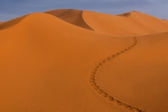 Camel Tracks by  Lorna Scott