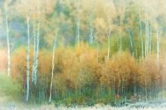 Impression Of Autumn by  Kasandra Sproson