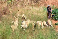 Shepherd by  Grace Yang