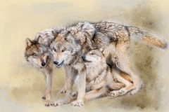 Wolves At Play by  Helmi Macgregor