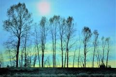 A Walk In The Trees by  John Fox