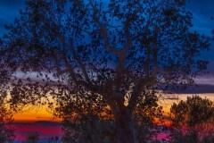 Artsy Fartsy Sunset Tree by  Rick Regamble